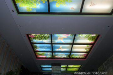 """Белый потолок с подсветкой, вставками коричневыми и фотопечатью """"Голуби в саду"""" в зале."""