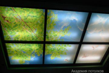 """Потолок с перегородками и фотопечатью """"Береза и небо""""."""