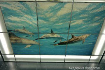 """Матовый потолок с фотопечатью """"Дельфины"""" в ванной."""