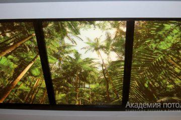 """Потолок с фотопечатью """"Тропики""""."""
