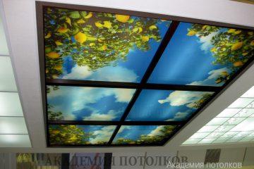 """Потолок с фотопечатью """"Небо и лимонные деревья"""" с коричневыми вставками."""