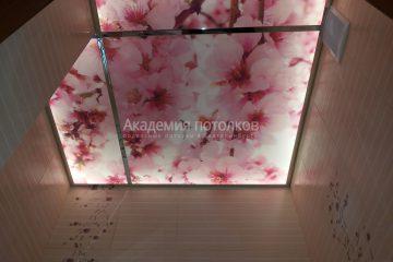 """Потолок с фотопечатью """"Цветущая вишня"""" на матовом стекле с подсветкой в ванной."""